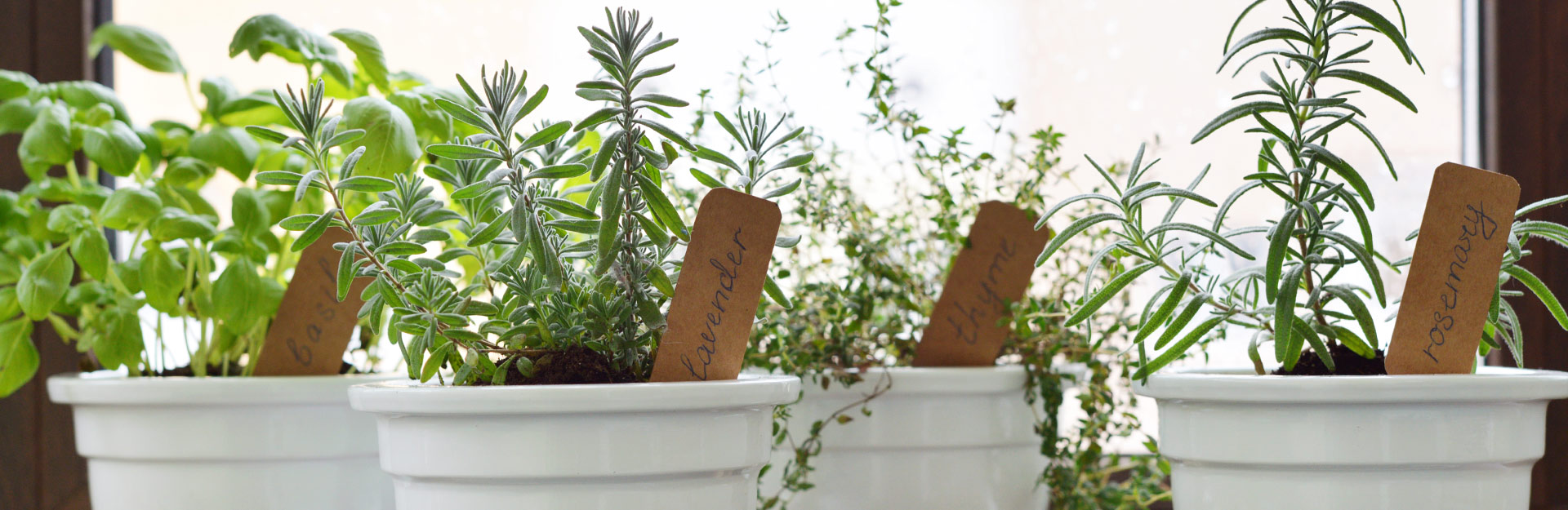 herbs grown in white pots with wooden plant labels